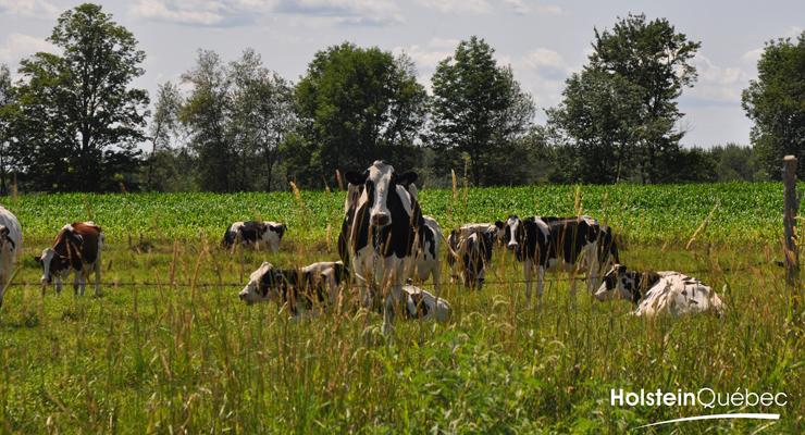 Mission Holstein Québec